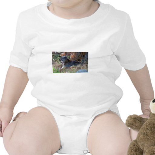 Gray Wolf Yawning. Zoo America, Hershey, Pennsylva Baby Creeper