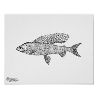 Grayling Fish Poster