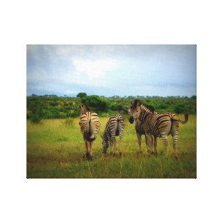 Grazing African Zebras Canvas Print