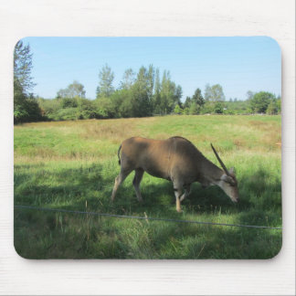 Grazing Antelope Mouse Pad