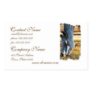 Grazing Appaloosa Business Cards
