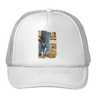Grazing Appaloosa Horse Baseball Hat