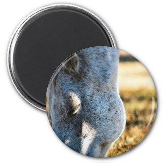 Grazing Appaloosa Horse Magnet Refrigerator Magnet