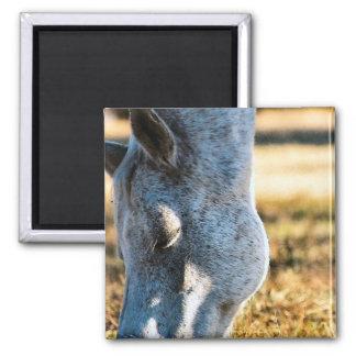 Grazing Appaloosa Horse Magnet Fridge Magnet