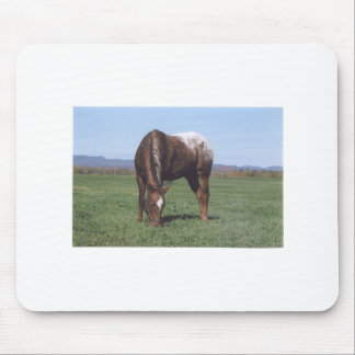 Grazing Appaloosa Mouse Pad
