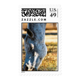 Grazing Appaloosa Postage Stamp