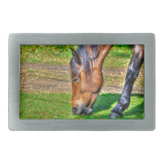 Grazing Bay New Forest Pony Horse Photo Belt Buckle