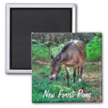 Grazing Bay New Forest Pony Wildlife Magnets