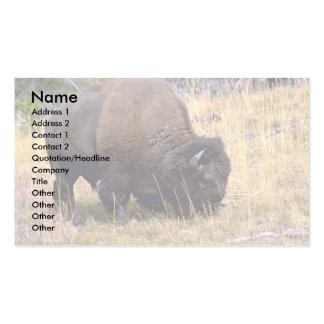 Grazing bison, Yellowstone National Park Business Card Template