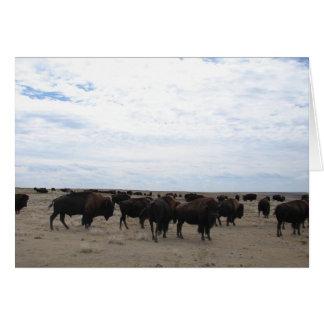 Grazing Buffalo Greeting Cards
