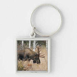 Grazing Bull Moose Keychain
