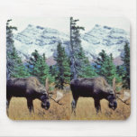 Grazing Bull Moose Mouse Pad