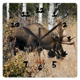 Grazing Bull Moose Square Wall Clock