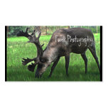 Grazing Caribou Double-Sided Standard Business Cards (Pack Of 100)