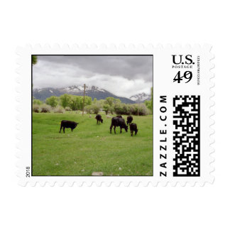 Grazing Cattle v2 Postage Stamp
