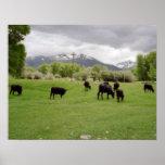 Grazing Cattle v2 Poster
