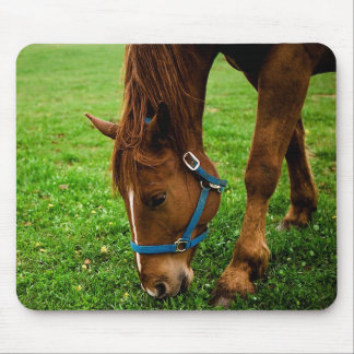 Grazing Chestnut with Stripe Mouse Pad
