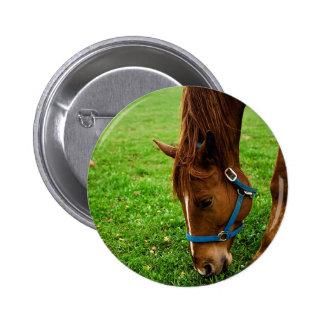 Grazing Chestnut with Stripe Pinback Button