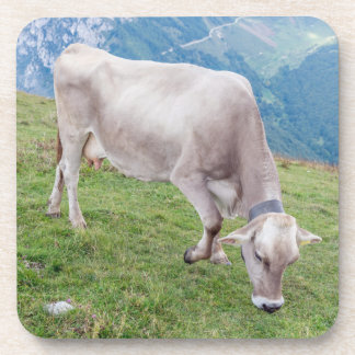 Grazing cow hard plastic coasters