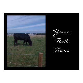 Grazing Cow Post Card