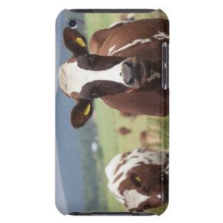 Grazing cows iPod Case-Mate case