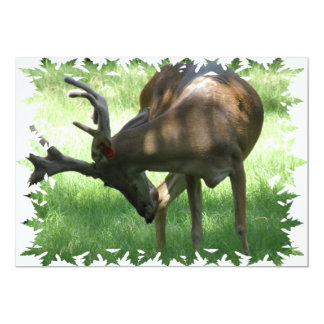 "Grazing Deer Invitation 5"" X 7"" Invitation Card"