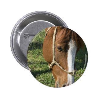 Grazing Draft Horse Button