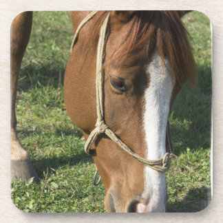 Grazing Draft Horse Cork Coasters