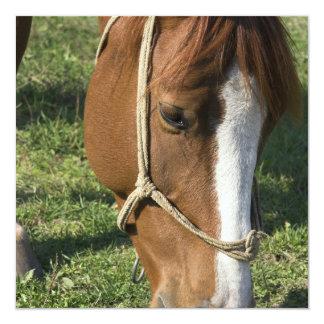 """Grazing Draft Horse Invitations 5.25"""" Square Invitation Card"""