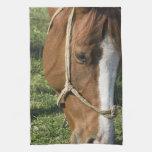 Grazing Draft Horse Kitchen Towel