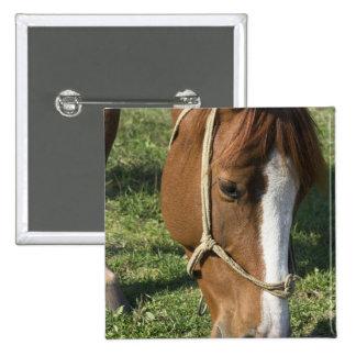 Grazing Draft Horse Pin