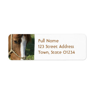 Grazing Draft Horse Return Adress Mailing Label