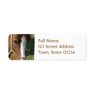 Grazing Draft Horse Return Adress Mailing Label Return Address Label