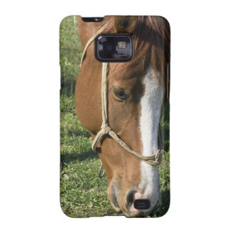 Grazing Draft Horse Samsung Galaxy Case Samsung Galaxy S2 Cases