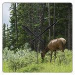 Grazing Elk Wallclocks