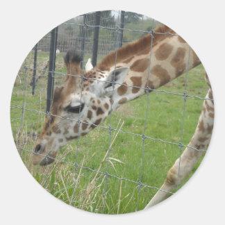 Grazing Giraffe Sticker