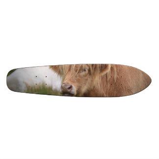 Grazing Highland Cow Skate Deck