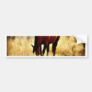 Grazing Horse Bumper Sticker