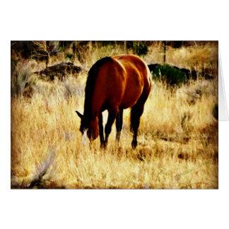 Grazing Horse Card