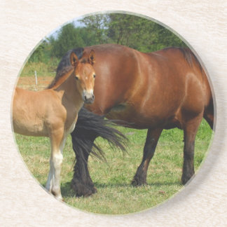 Grazing Horse Family Coasters