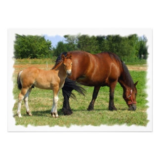 Grazing Horse Family Invitation