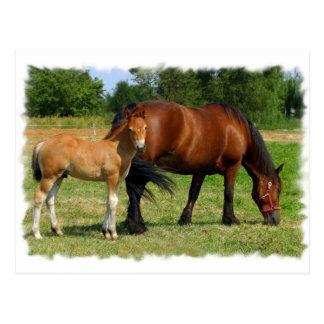 Grazing Horse Family Postcard