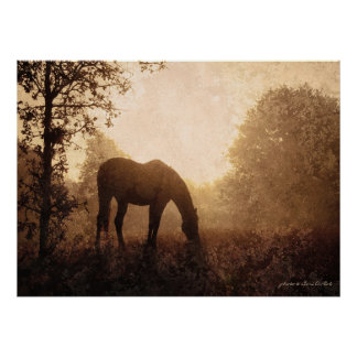 Grazing Horse on Foggy Morning Poster