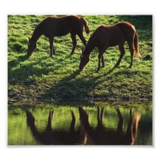 Grazing Horse Pair Poster