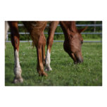 Grazing Horse - Poster