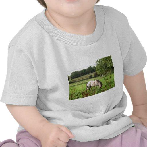 Grazing Horse T Shirts
