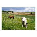 Grazing horses art photo