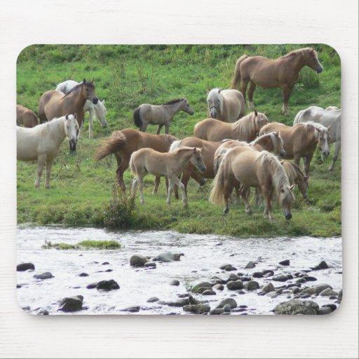 Grazing horses pad mousepads