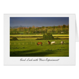 Grazing Horses / Ponies, Good luck with Experiment Card