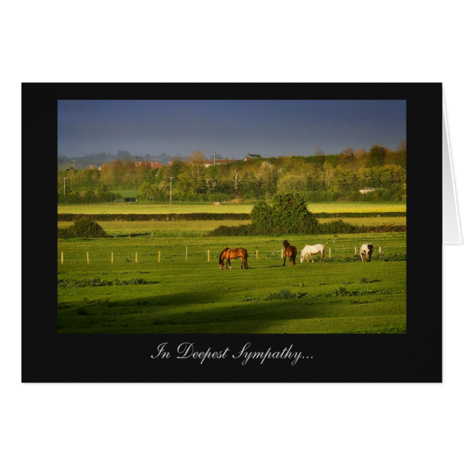 Grazing Horses / Ponies - In Deepest Sympathy Greeting Card